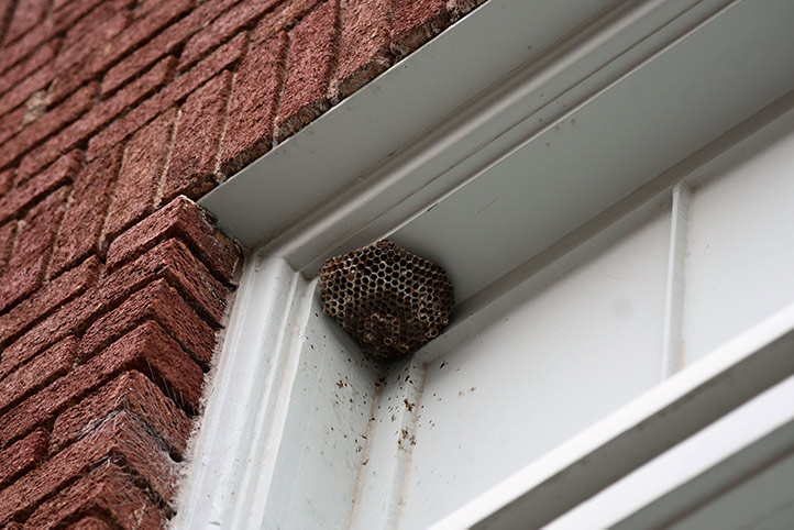 We provide a wasp nest removal service for domestic and commercial properties in Pimlico.